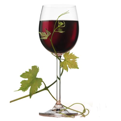 Вино каберне совиньон cabernet sauvignon