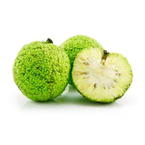 Адамово яблоко (Маклюра) фото