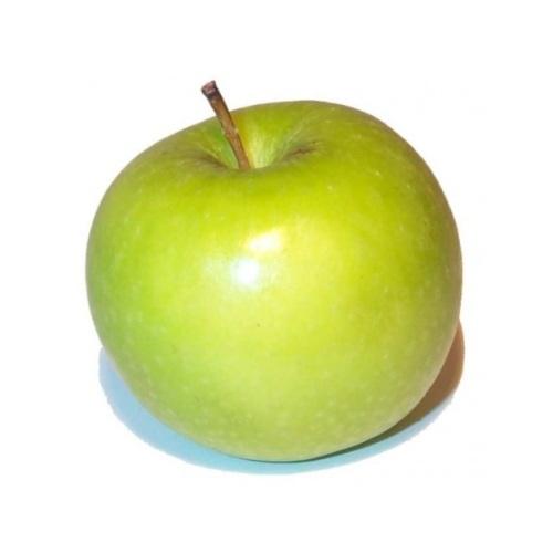 антоновка фото яблок