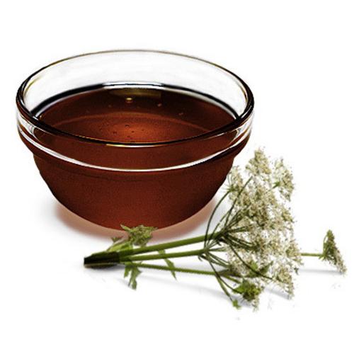 Дягилевый мед. Свойства дягилевого меда | FindFood.ru