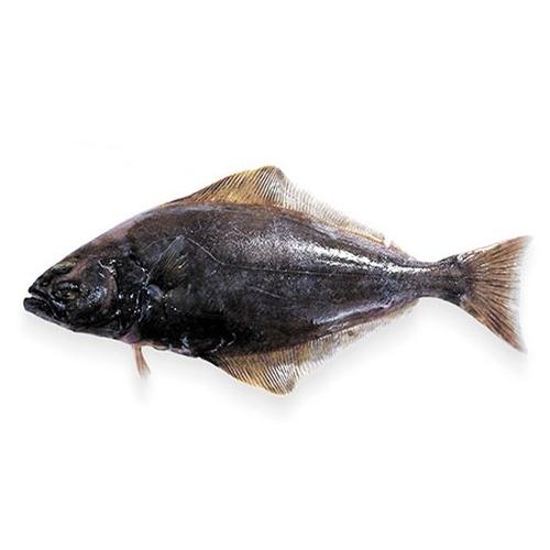 фото рыбы палтус