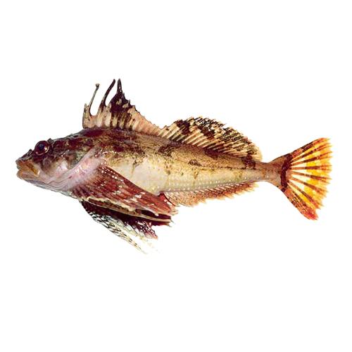 бычки рыбы фото