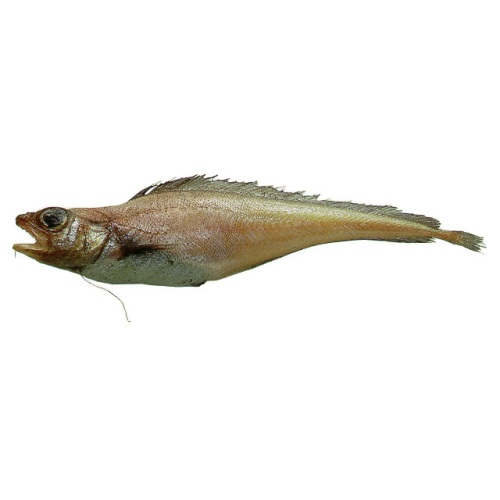 Рыба лемонема фото