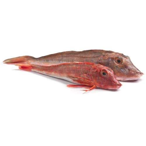 морской петух рыба рецепты