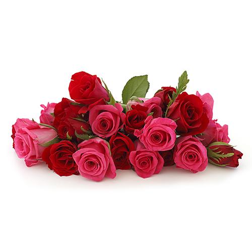 Шиповник фото цветы