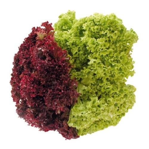 рецепты вкусных салатов с телятиной
