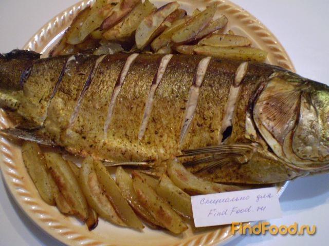 рыба толстолобик рецепты приготовления жарить